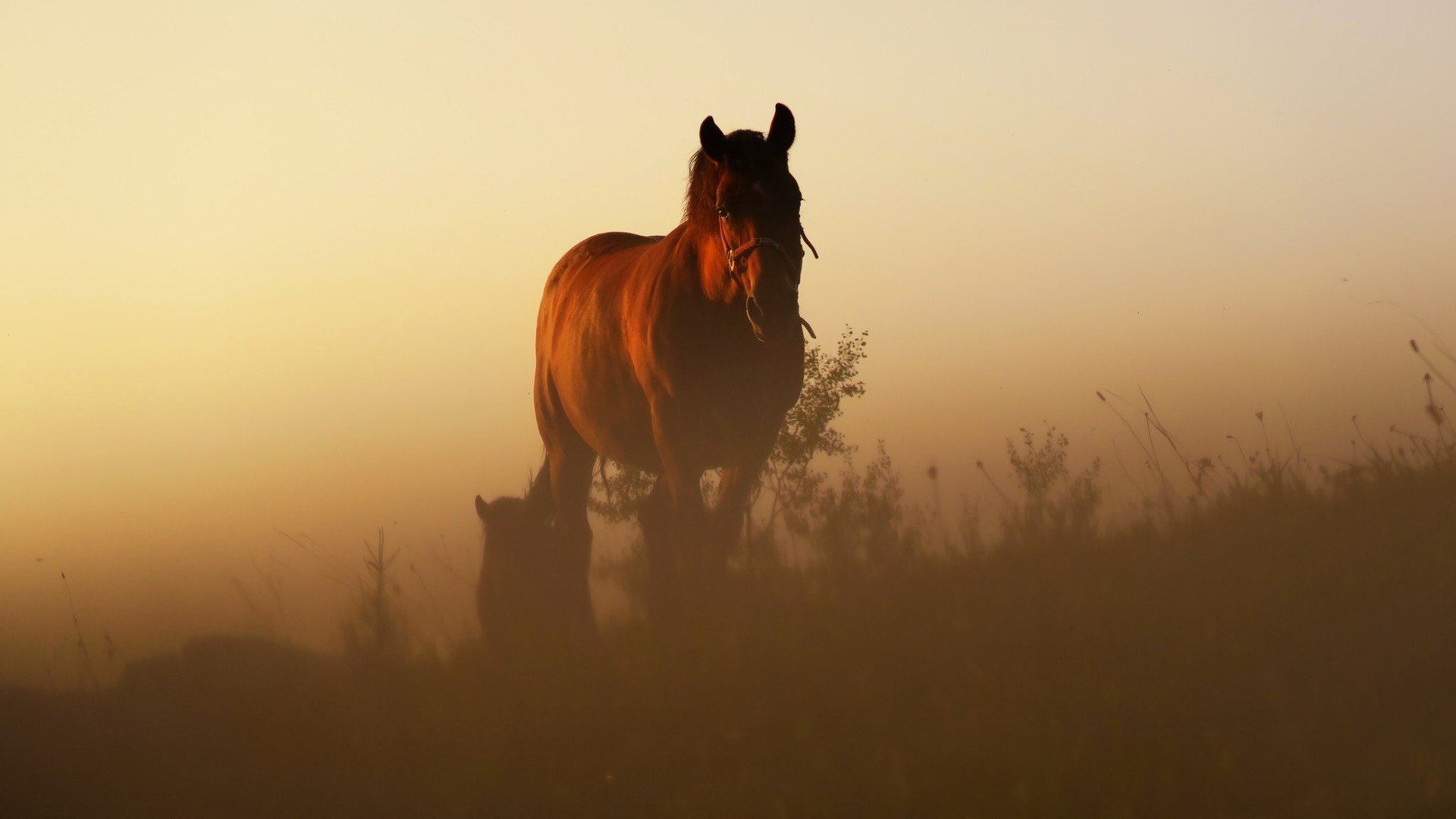 morning, Animals, Horse, Sunlight HD Wallpapers / Desktop