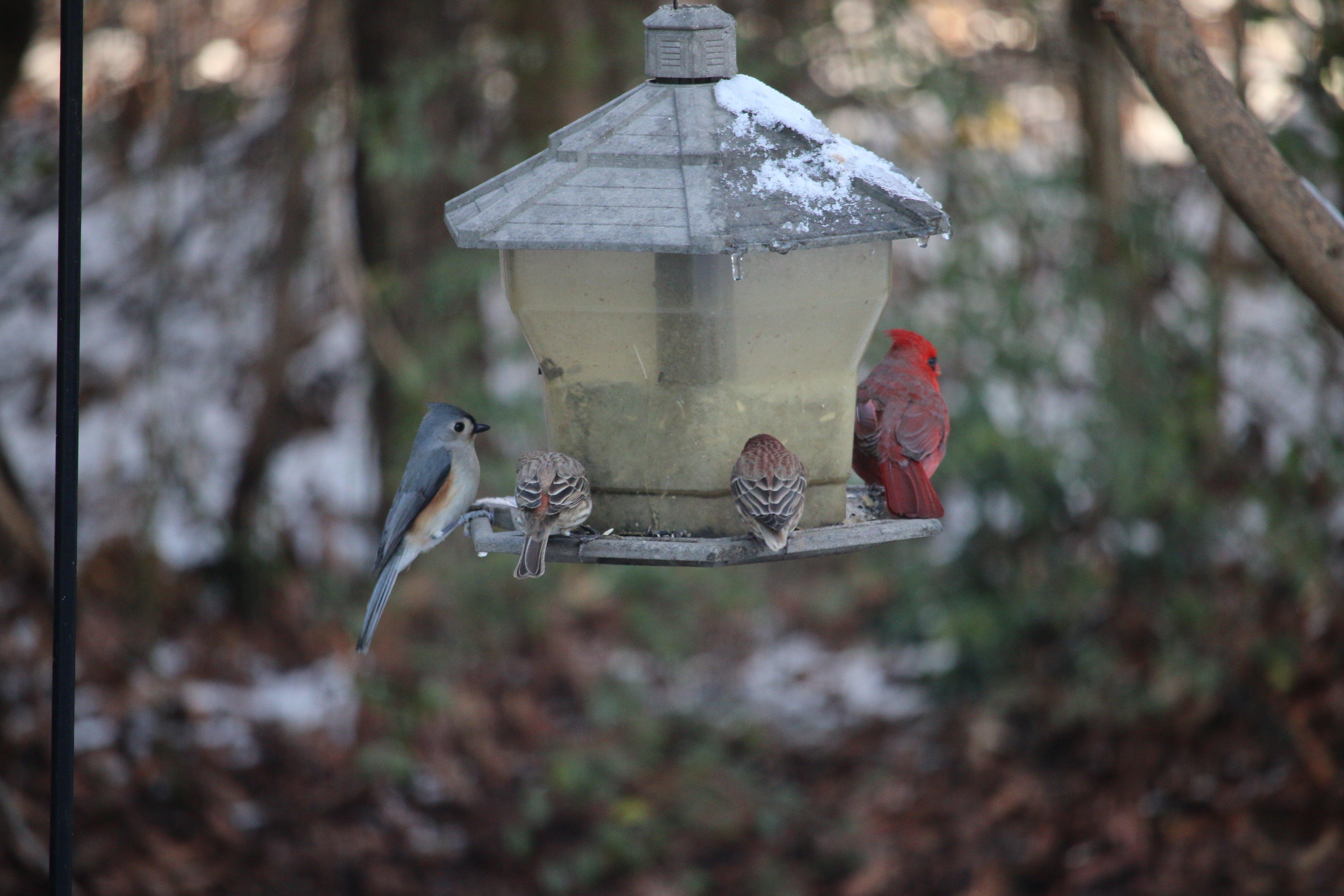 snow, Cold, Animals, Birds Wallpaper