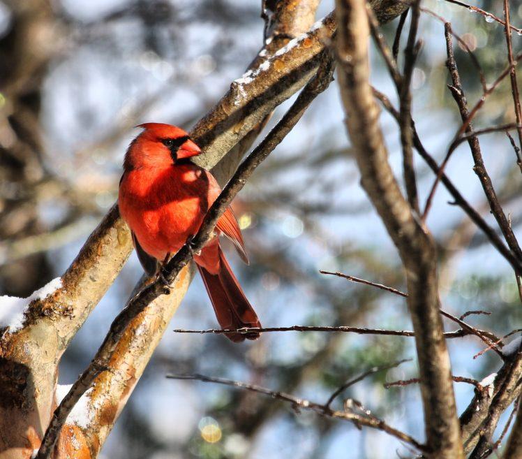snow, Cold, Animals, Birds HD Wallpaper Desktop Background