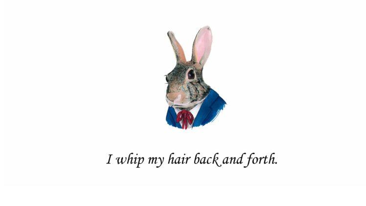minimalism, Simple background, Digital art, Quote, Humor, Text, Animals HD Wallpaper Desktop Background