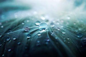 nature, Water drops, Macro