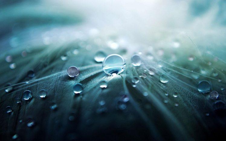 nature, Water drops, Macro HD Wallpaper Desktop Background