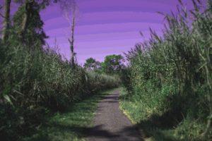 path, Nature