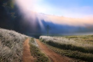 nature, Photography, Landscape, Morning, Dirt road, Grass, Mist, Sun rays, Trees, Panorama