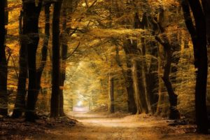nature, Photography, Landscape, Path, Forest, Fall, Yellow, Dirt road, Trees, Fairy tale