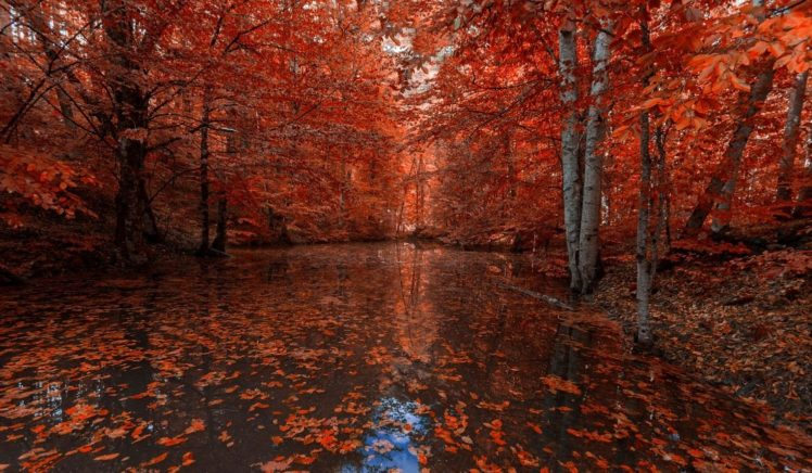 nature, Photography, Landscape, Fall, Red leaves, River, Forest, Trees HD Wallpaper Desktop Background