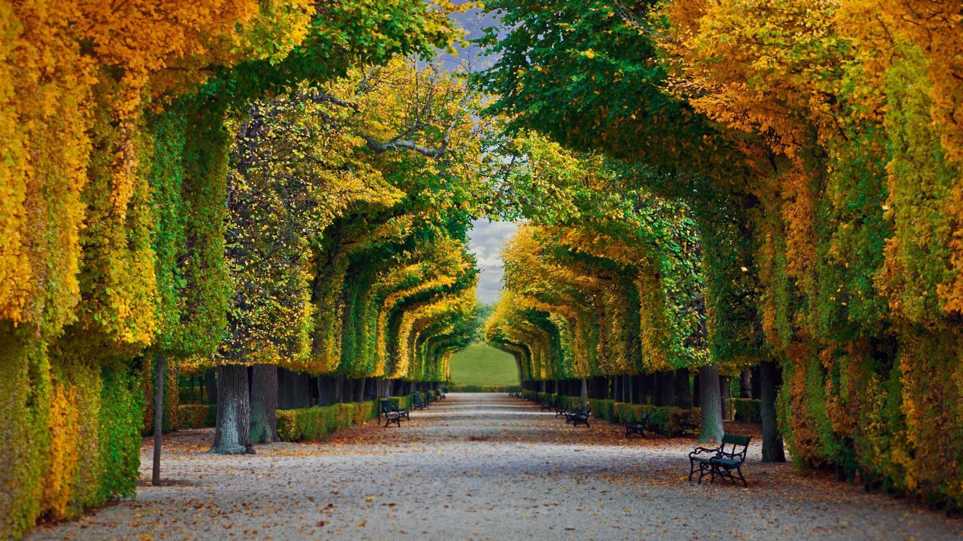Nature Landscape Trees Forest Fall Park Bench Leaves Vienna