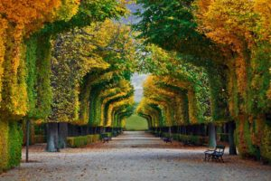 nature, Landscape, Trees, Forest, Fall, Park, Bench, Leaves, Vienna, Austria, Schönbrunn, Path