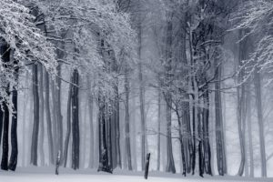 nature, Landscape, Trees, Forest, Winter, Snow, Monochrome, Mist, Branch