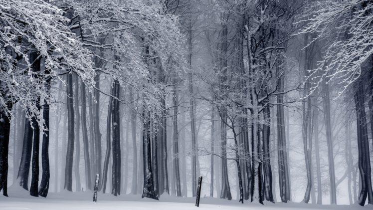 nature, Landscape, Trees, Forest, Winter, Snow, Monochrome, Mist, Branch HD Wallpaper Desktop Background