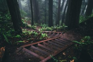 nature, Stairs, Forest