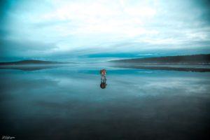 animals, Dog, Siberian Husky, Lake, Frozen lake, Landscape, Winter, Snow, Trees