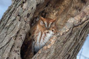 trees, Owl, Nature, Animals