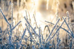 winter, Cold, Ice, Sunlight, Plants