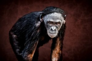 apes, Animals