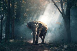photography, Elephant