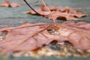 macro, Leaves