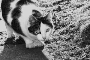 cat, Black, White