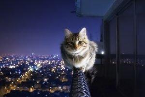 cat, Night, Balcony