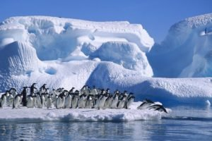 iceberg, Sea, Birds, Penguins