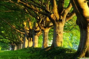 trees, Green