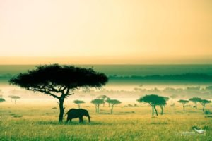 Africa, Kenya, Savannah, Elephant
