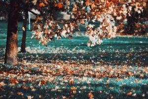 fall, Leaves, Trees