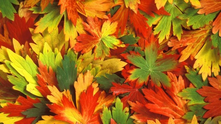 Fall Leaves Hd Wallpapers Desktop And Mobile Images Photos