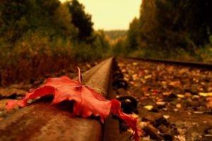 fall, Leaves, Railway