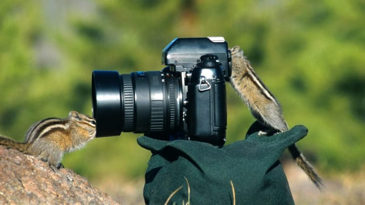 Camera Chipmunks Photography Hd Wallpapers Desktop And