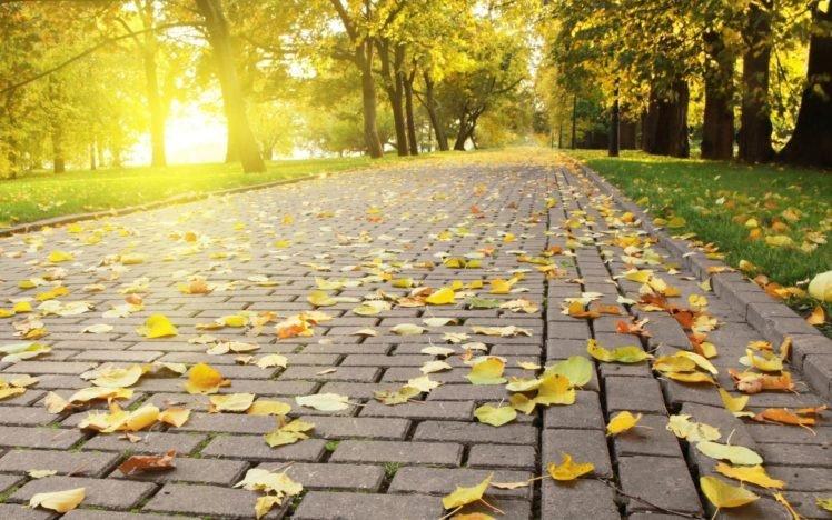 trees, Leaves HD Wallpaper Desktop Background
