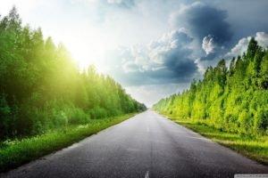 road, Trees