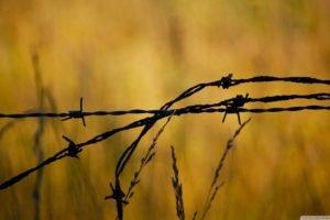 closeup, Barbed wire