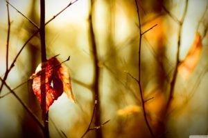 closeup, Leaves