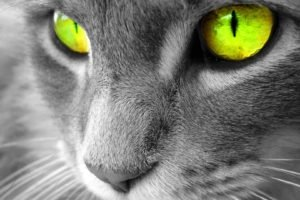 eyes, Cat, Selective coloring