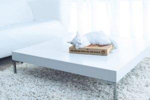 cat, Pizza, Boxes, Table, Carpets