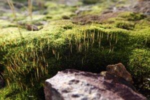 macro, Rock, Moss