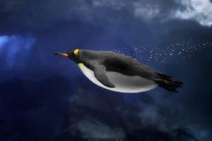 underwater, Penguins, Birds
