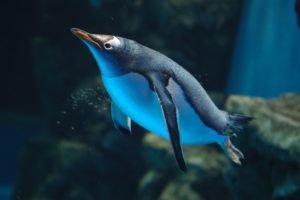 penguins, Birds, Underwater