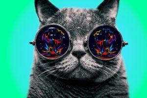 Morpheus, Cat, Dope, Glasses, Explosion