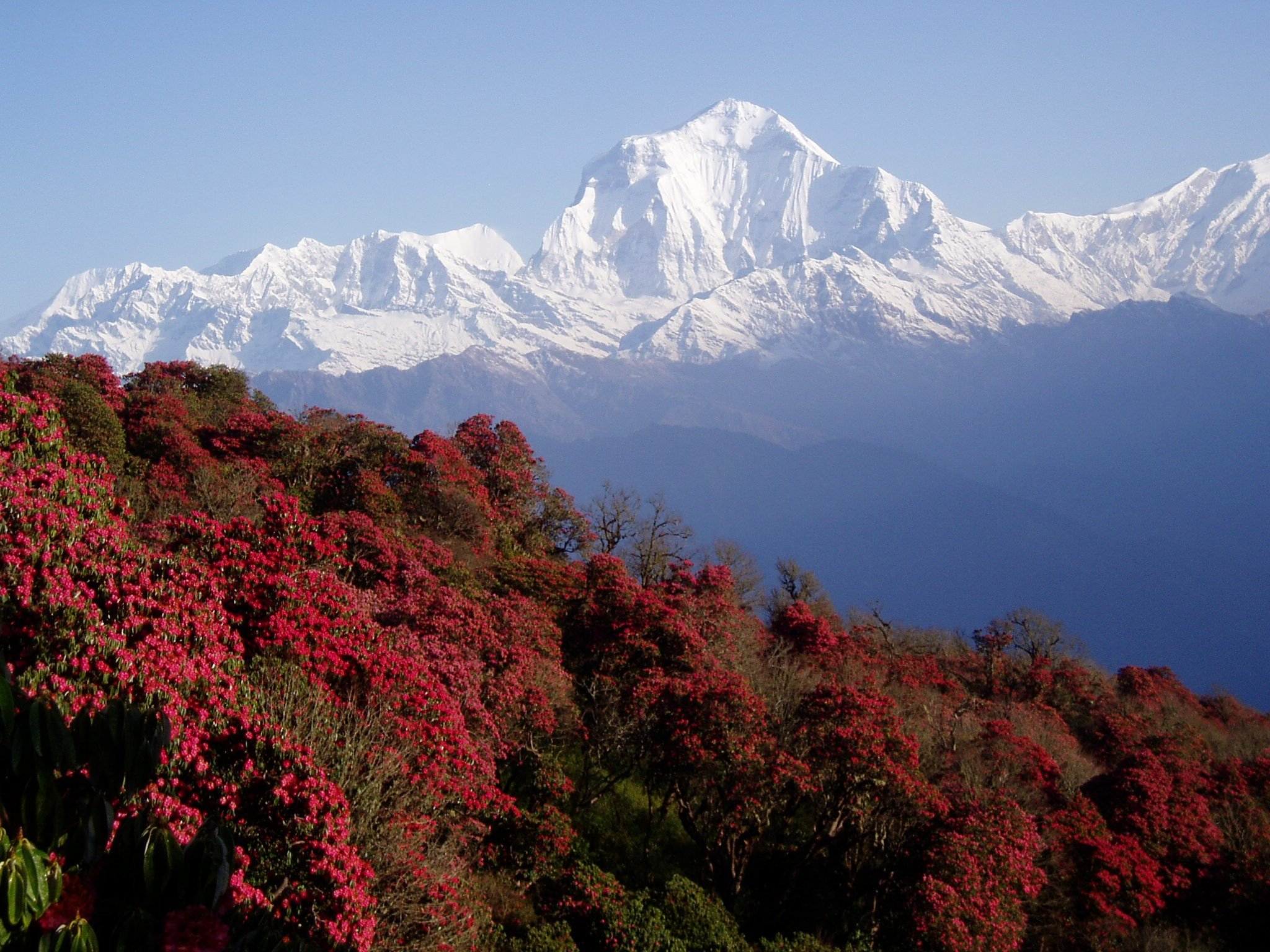 Nepal Himalayas Mountains Hd Wallpapers Desktop And