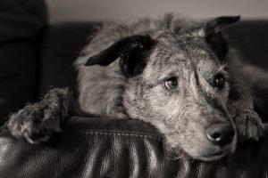 dog, Monochrome