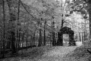 black, White, Ruin, Forest, Leaves, Trees, Fallen tree, Path, Gates
