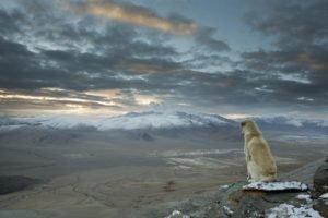 Enlightenment, Dog