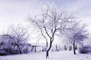 winter, Russia, Snow, Trees