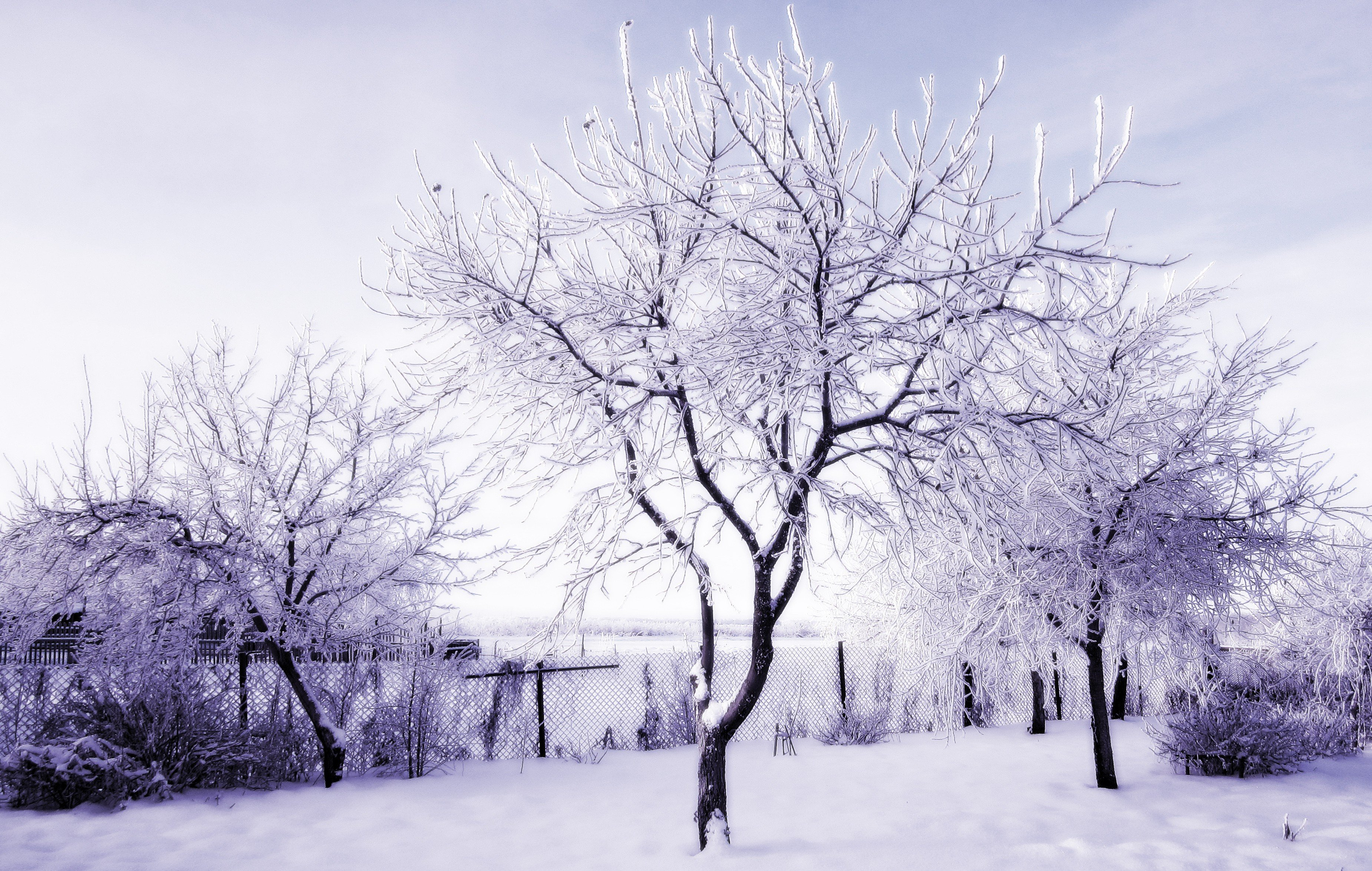 winter, Russia, Snow, Trees HD Wallpapers / Desktop and ...