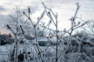 Russia, Winter, Snow, Closeup