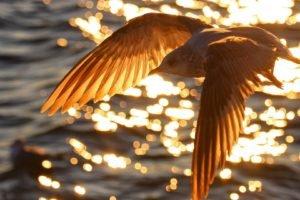 birds, Bokeh, Sunlight, Water, Flying