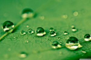 water drops, Leaves, Green