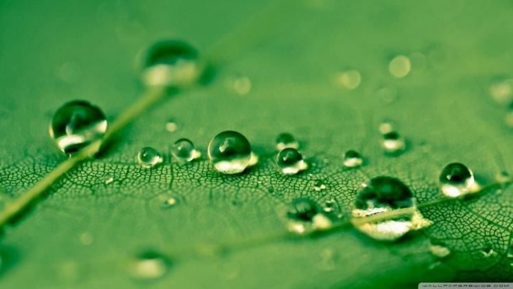 water drops, Leaves, Green HD Wallpaper Desktop Background